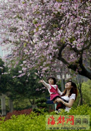 漳州胜利公园姹紫嫣红