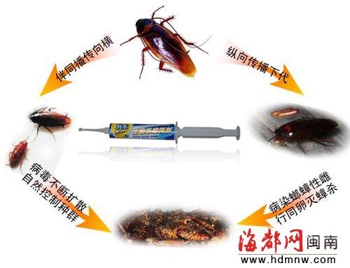蟑螂的危害与防治_四害防治之蟑螂类