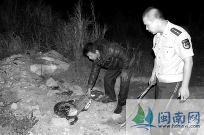 母狗为保护幼崽 夜斗2米长大蟒蛇半个小时