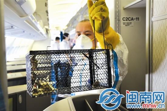 香港一飞机座椅下惊现老鼠窝