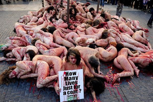 西班牙动物权利保护者行为艺术