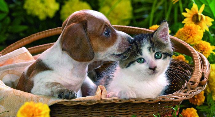 儿童尽量不要逗猫狗等动物