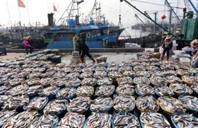 石狮渔业生产进入淡季 海鱼市场价格将随之上涨