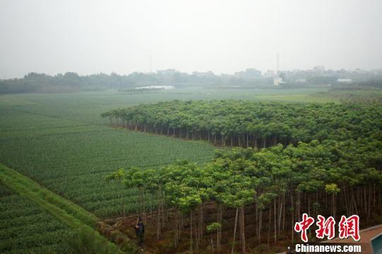 漳州启动闽南文化生态走廊建设 国际专家献策