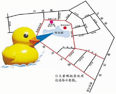 鸭子的结构分布图