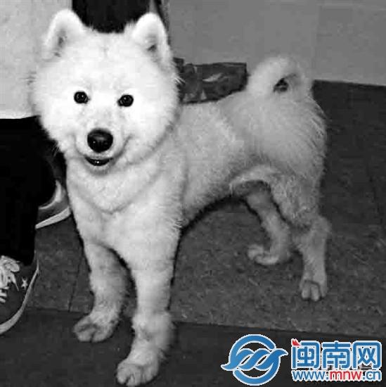 现委托漳州小动物科学养护救助中心,帮忙寻找主人.