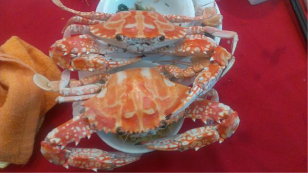 附近也有很多海鲜酒楼   去的话一定要吃海鲜啊非常鲜美!