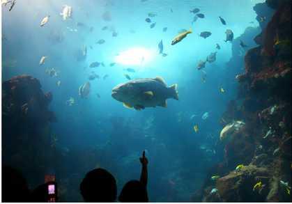 """6月来厦门海底世界看红树林鳉鱼""""爬树""""吧"""