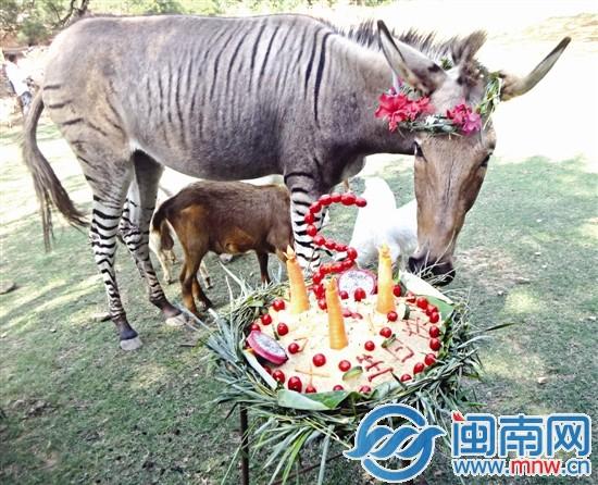 动物园特制五谷杂粮蛋糕帮庆生