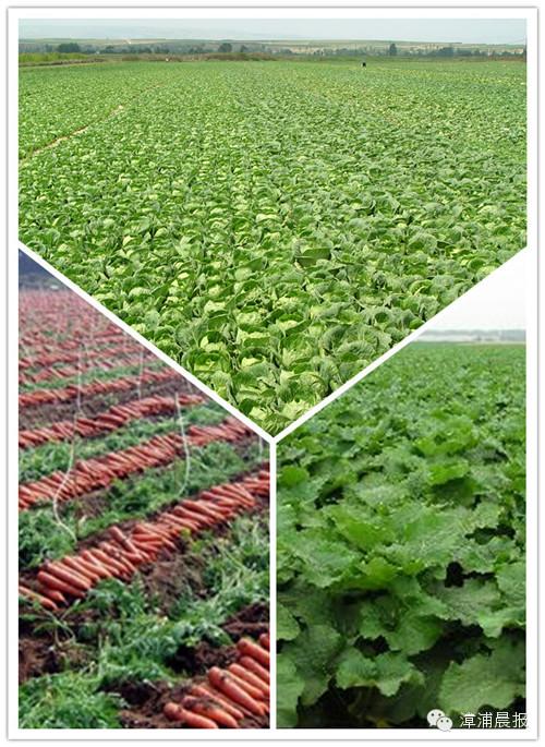 国家级无公害蔬菜种植基地
